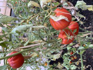 Le Jardin du Chef Eric Girardin | Potager Maison des Têtes